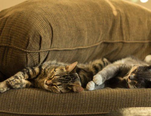 Como elegir la tela del sofá si tienes gato