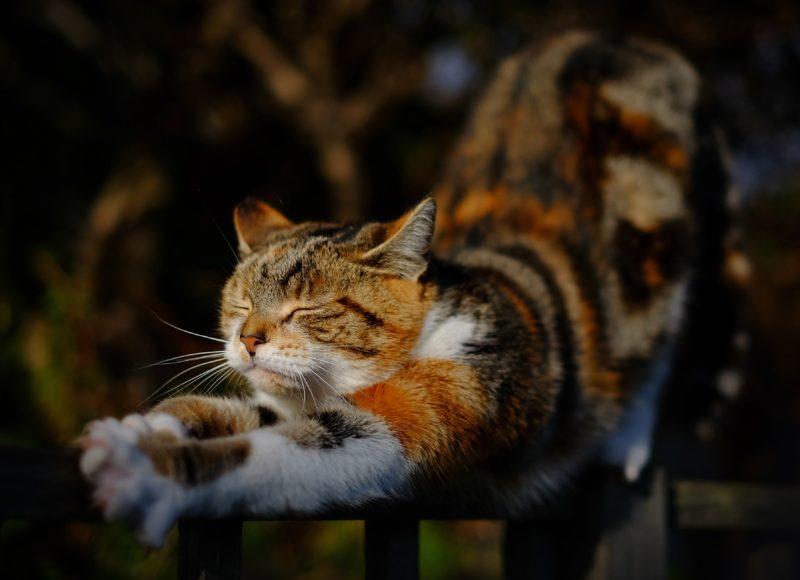 como elgir la tela del sofa si tienes gato